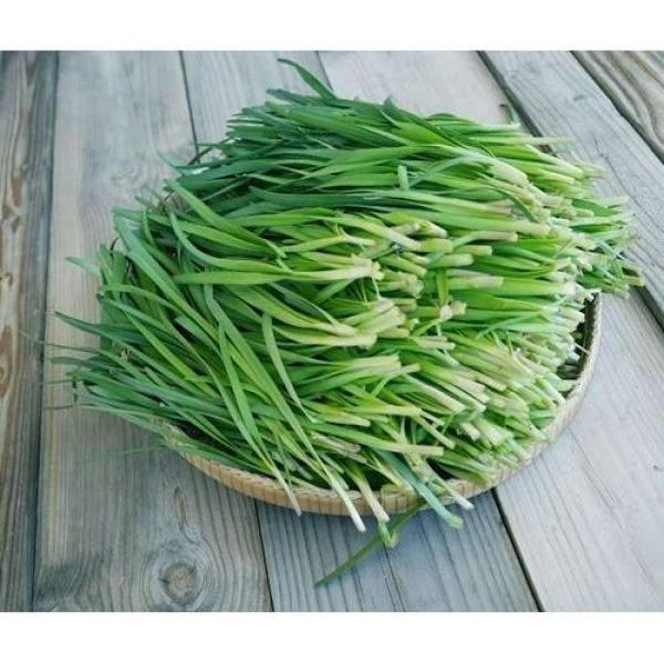 Hạt giống hẹ cao sản - PhuNongSeeds